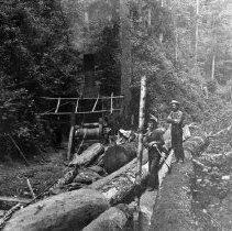 Image of N1911 - REMARKS:Steam donkey logging, probably on Camp Creek. Incline ? Lincoln Hancock, donkey puncher.