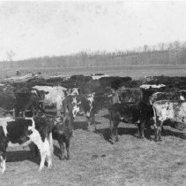 Image of N3279 - COUNT:2