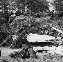 Image of N332 - REMARKS:ruins of oak tree at Elkton. Early Umpqua county court met under this giant old oak.