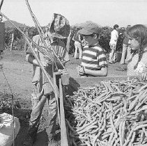 Image of N35.292 - REMARKS:Bean picking at farm in Roseburg, OR, ca. 1974.  OBJECT DATE:August 14, 1974