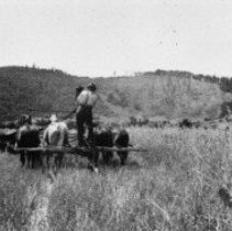 Image of N5640 - REMARKS:Burnett collection; Tom Burnett, driving a 4-horse team and header, Round Prairie, Myrtle Creek area, Douglas co. ca. 1910.  OBJECT DATE:ca. 1910