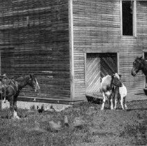 Image of Children at old Riddle Ranch