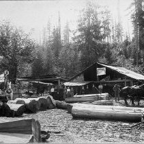 """Image of N8002 - REMARKS:Stewart Sawmill, 6 miles from Rainier, Oregon; photo taken Sunday, August 27, 1899. James K. Stewart at right driving dark team; Bruce Stewart is the boy wearing a cap. the sign reads, """"Dippold, son & Stewart"""". the mill is evidentally a shingle mill; there is a team and wagon loaded with bundles of shingles at far left and cedar logs shown in forground.  OBJECT DATE:August 27, 1899"""