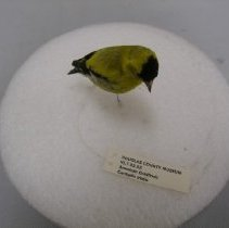 Image of VI.7.82.52 - American Goldfinch
