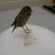 Image of XI.12.82.115 - Savannah Sparrow