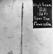 "Image of N7856 - REMARKS:""High Lead Bill"" standing on top of a 150' spar tree at Smith-Powers Logging Operation at Smith, Oregon. Ca. 1915.