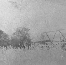 Image of N7931 - REMARKS:Sol Williams driving a grain binder on the Cobb Ranch near Kellogg, Oregon, ca. 1910.  OBJECT DATE:ca. 1910
