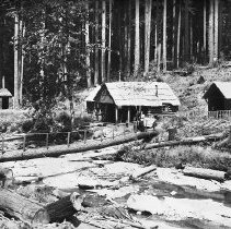 Image of N11469 - 3 negs. Neg. 1: Hiram S. Kribs Homestead Claim. Location - T. 24S., R. 9W., 22 (Umpqua National Forest). Date- 7/21/1910: A. Ireland, photog. Neg. 2: Hiram S. Kribs Homestead Claim, showing stand of timber. Neg. 3: Portion of Hiram S. Kribs Homestead Land Claim, shows stand of timber an slashing in foreground.
