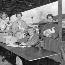 Image of N14839 - REMARKS:Poultry judging, Douglas County Fair, Roseburg, OR. Ca 1950s.  OBJECT DATE:Ca 1950s