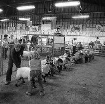 Image of N35.665 - REMARKS:Sheep dog trials, Douglas County Fairgrounds, ca 1977. Shown are Dave Hatfield and his dog, Lilly, of Dixonville.