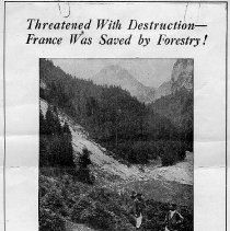 Image of Studies in French Forestry