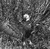 Nn spread eagle mine the