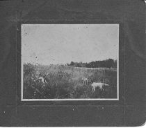 Image of 2011.026.223 - Photograph