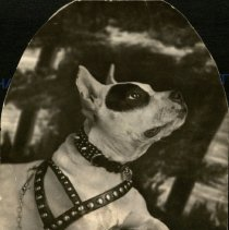 Image of Dog with Harness