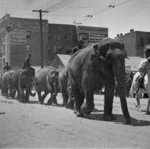 Image of UNRA-P482-180 - Circus elephants parade through downtown Reno.