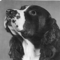 Image of UNRS-P1997-58-277 - Toots, George Whittell's beloved dog 1943-1957