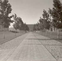 Image of UNRA-P239-1 - This photograph shows the walkway along the west side of the Quad viewed from the south. The Chemistry Building, historic Gymnasium, and Mackay School of Mines are visible in the background (photographic print, 3.25. x 5.5 inches).