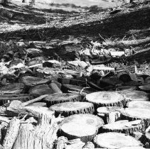 Image of UNRS-P2003-10-243 - [1972 Stream Clean Up.  Stumps and cut logs clogging stream bed]