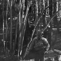 Image of UNRS-P2003-10-286 - [1972 Stream Clean Up. Man carrying log from stream]