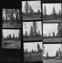 Image of UNRS-P2003-10-337 - [Series of reverse negs of wooded area near road]