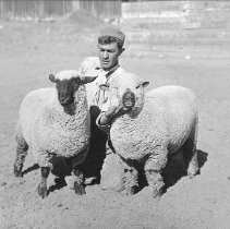 Image of UNRA-P482-227 - A student kneels between two sheep.
