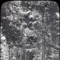 """Image of UNRS-P2006-08-053 - 3-28. 300721. Near Grouse Meadow (EM). 4"""". [Markers in box: Merced Range Yosemite, GranitePass to Palisade, King's Canyon, North Palisade and Mt Sill, East Side Palisades, Paradise Valley, Mt Woodworth Climb, Cartridge Creek - Marion Lake, Le Conte Cnn[Canyon?], Dusy Basin.]"""