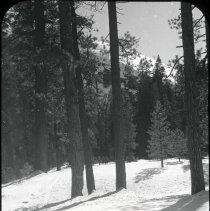 Image of UNRS-P2006-08-278 - 21-21. [Box Title: Donner Summit in Winter, Sierra Club, Norden. Markers in Box: Donner Pass in winter, Skiing to Lyell Feb 1934.]