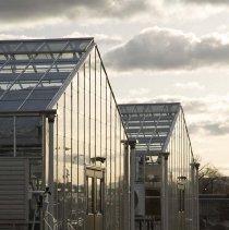 Image of UNRA-P3600-00352 - University Greenhouses
