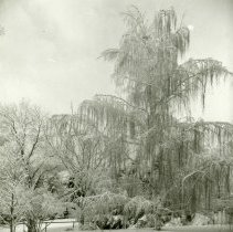 Image of UNRA-P1077-02 - Photograph of campus trees in snow.