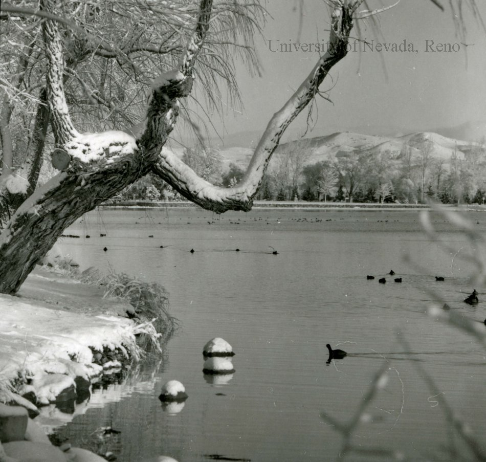 Unra P1077 64 Photograph Of Birds On Virginia Lake With Snow On