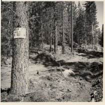 Image of UNRS-P1985-08-37489 - Photograph of forest area at Lake Tahoe, posted with no trespassing sign; photographic print