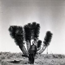Image of UNRS-P1992-01-4623 - Negative only. [man standing in front of Joshua tree]