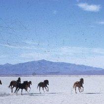 Image of UNRS-P1985-08-38395 - Wild horses. (Color slide)
