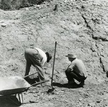 Image of UNRS-P1998-01-00010 - Photograph of Dr. Charles Camp and an unidentified man during Ichthyosaur excavation near Berlin, Nevada circa 1959. Handwritten on verso: Dr. Camp working at left. Upper right corner - paddle bones showing. Where crack appears - Dr. Camp counts 52 vertebra leading down to end of tail. This is only small section already uncovered. Bones of at least three separate Ichthyosaurs are in the area here. Another paddle being uncovered where men are at work.