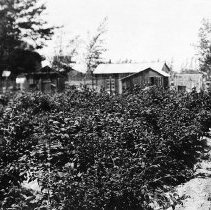 Image of UNRS-P2008-18-1933 - [B_W photos- Agriculture, Homesteads, Ranches].