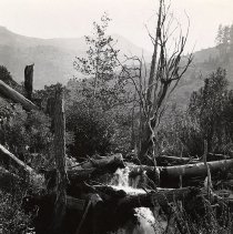 Image of UNRS-P0474-2 - Caption on image: Hunter Creek near Reno, Nevada. Stream half-choked with wreckage of old logging days. Dainty beauty of waterfall in sharp contrast to its surroundings. S. B. Doten [Samuel Bradford Doten], Photo. From the George Wharton James collection