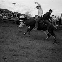 Image of UNRA-P524-01 - Photograph of the Aggie Rodeo: two unidentified students riding a cow (1956)