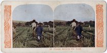 Image of 2007.051.009 - Stereograph