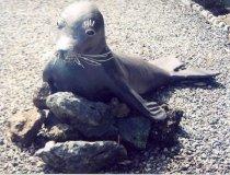 Image of Ho`olana the Hawaiian Monk Seal - Sculpture