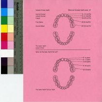 Image of Tooth Information Sheet
