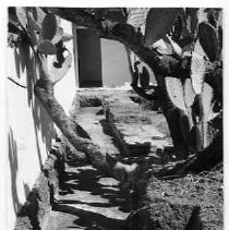 Image of 1982/078/1115 - Neasham, Aubrey