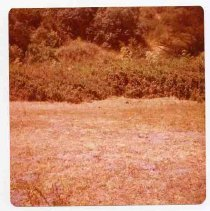 Image of 1982/078/2320 - Neasham, Aubrey