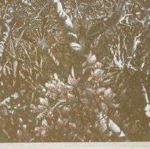 Image of 2000/074/188 - Kingsley Art Club