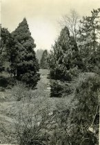 Image of Japanese Gardens  1936 - 1982.1.3