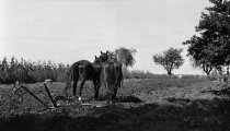 Image of Two Horses and Plow in a Field - 1985.1.12N