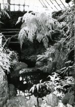 Image of Fernery  Interior Showing Roof Structure  1987 - 1987.3.29