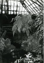 Image of Fernery  Interior Water 1987 - 1987.3.57