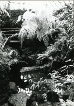 Image of Fernery  Interior Water 1987 - 1987.3.58