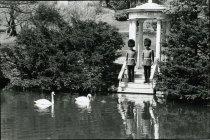 Image of Presentation of Swans  1982 - 2004.1.108