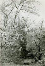 Image of Ravine Garden 1937 - 2004.1.144